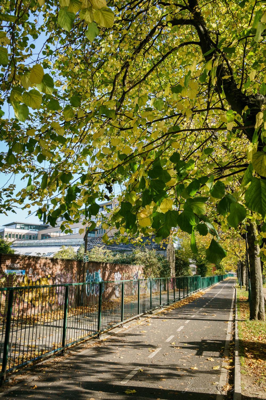 Autumn-Dublin-Sony-A6000-25.jpg