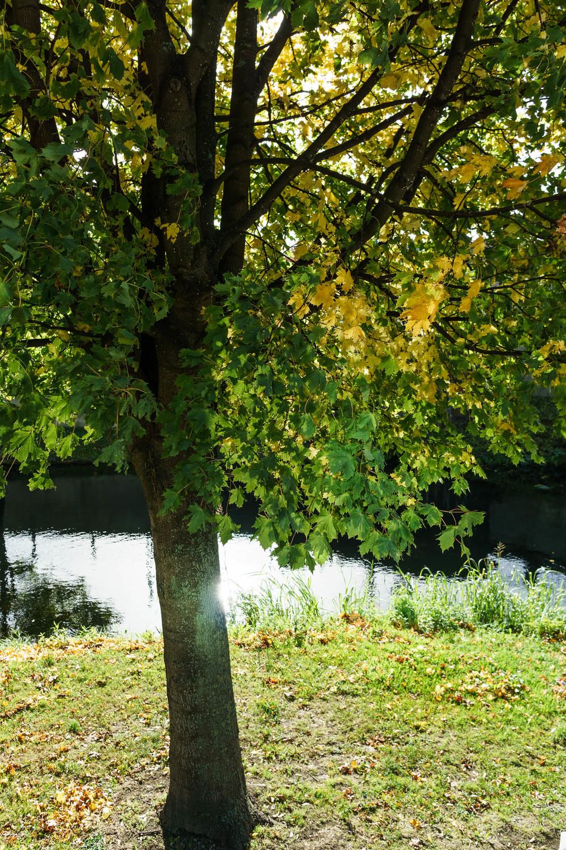 Autumn-Dublin-Sony-A6000-20.jpg