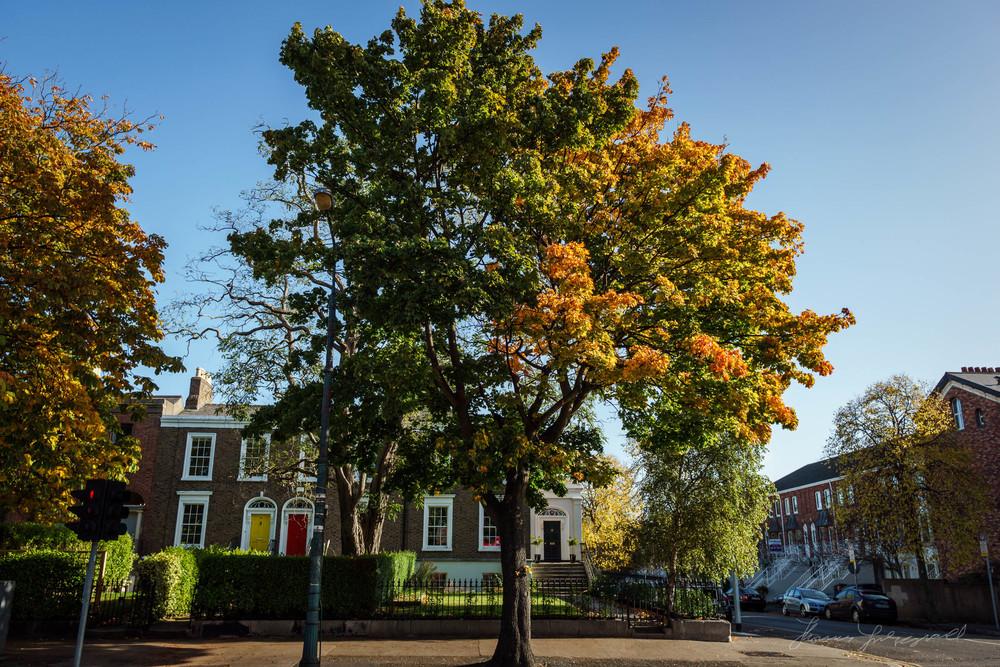 Autumn-Dublin-Sony-A6000-18.jpg