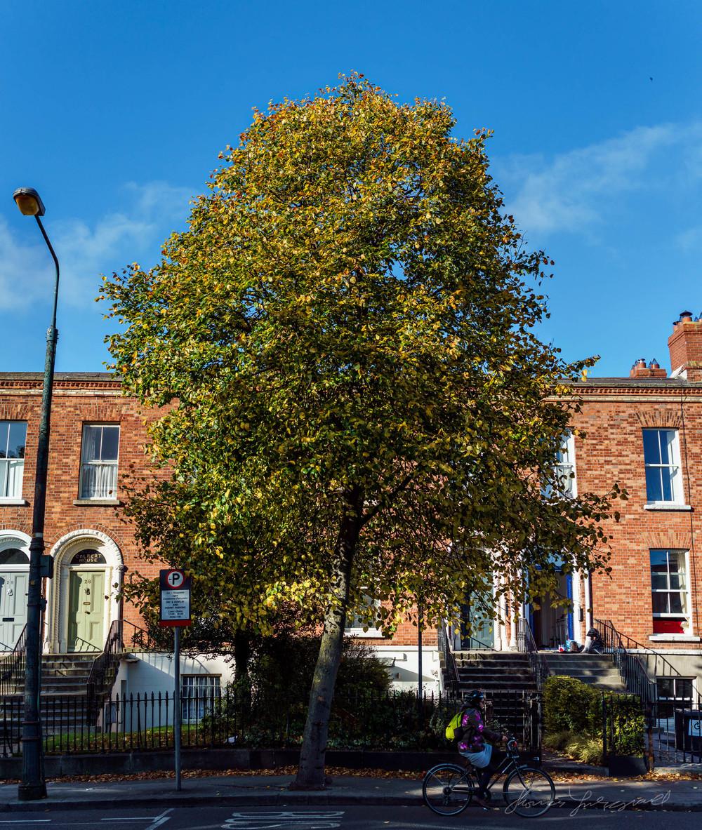 Autumn-Dublin-Sony-A6000-02.jpg
