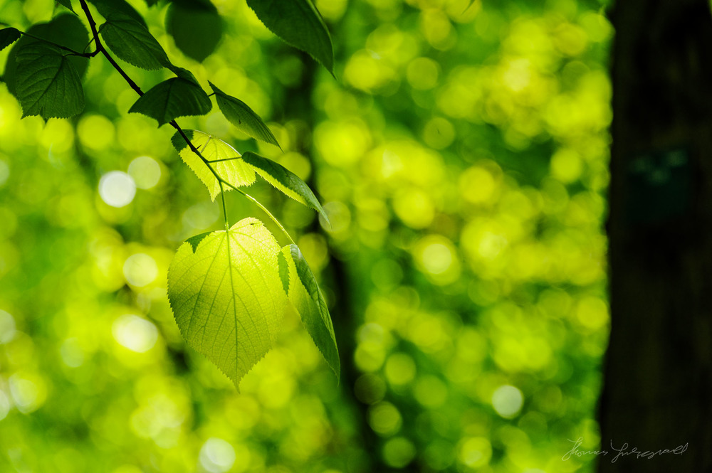 Dappled Light on a Leaf