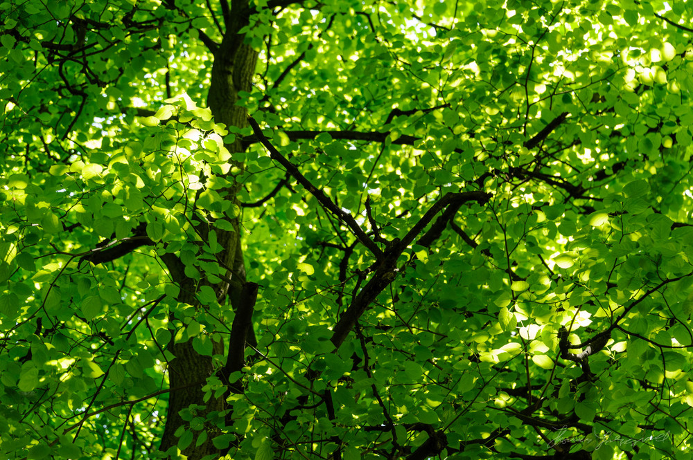 Patterns of Light and Green