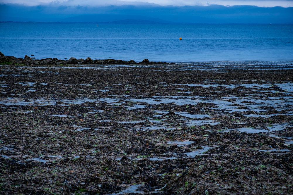 Galway-Solstice-9.jpg