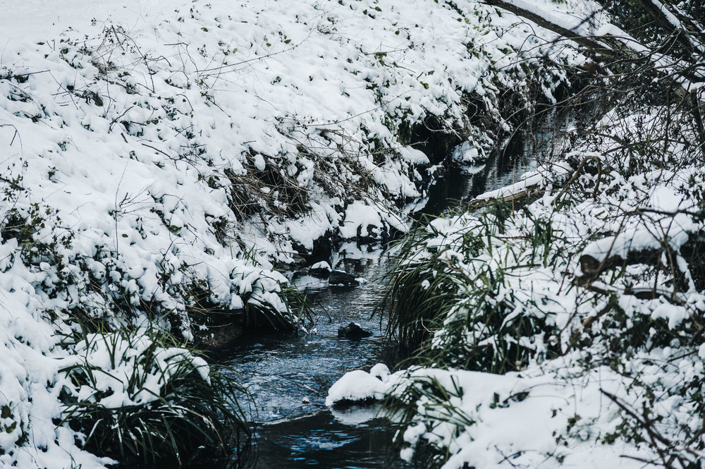 Snow on a Stream in Dublin