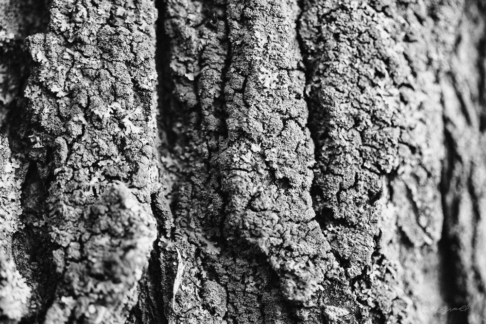 Black and White Macro