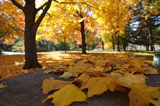 autumn-2898551_640.jpg
