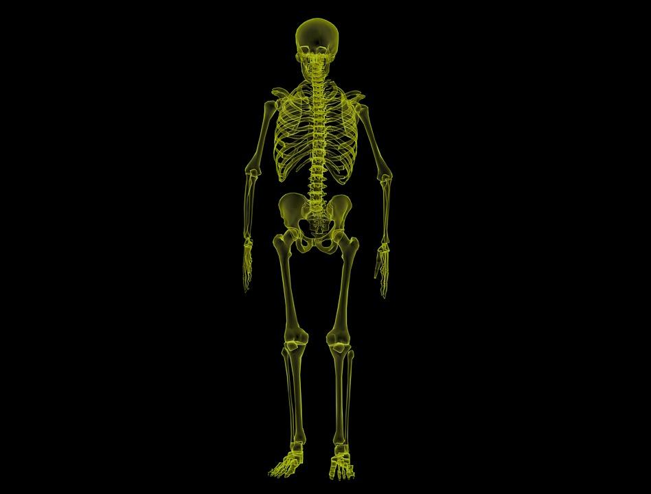 human-skeleton-1813086_960_720.jpg