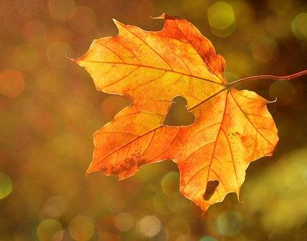 Heart in Leaf.jpg