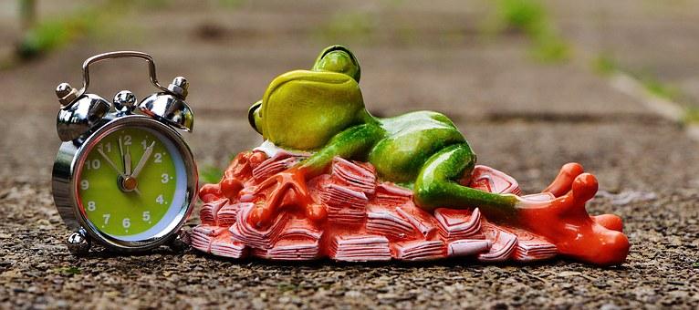 Sleeping frog.jpg