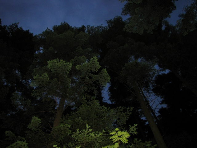 a sudden flash in the forest at twilight (640x480).jpg