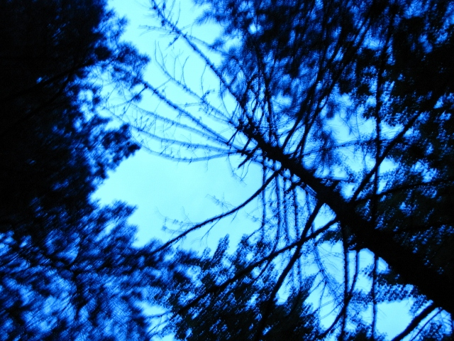 dusky blues (640x480).jpg