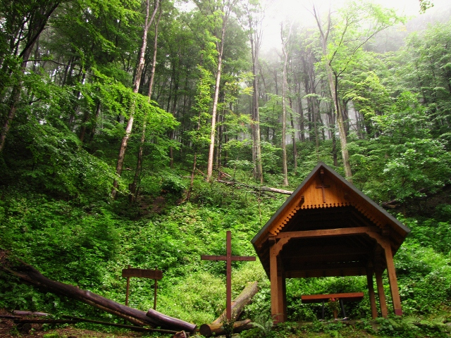 forest congregation (640x480).jpg