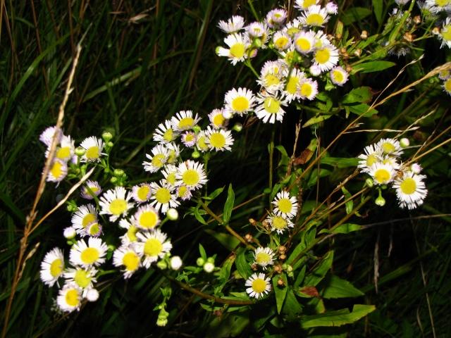 night flowers (640x480).jpg