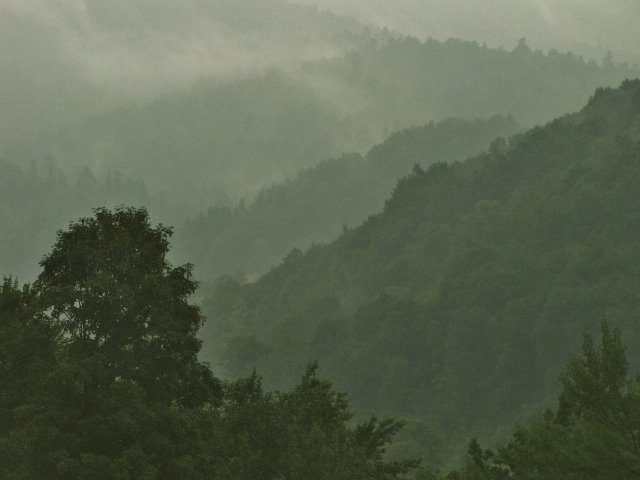rising out of the mist (640x480).jpg