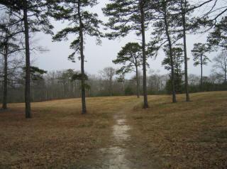 Ripley's Field