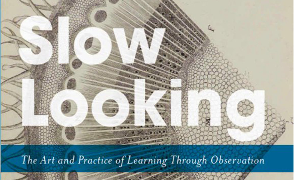 Slow Looking by Shari Tishman