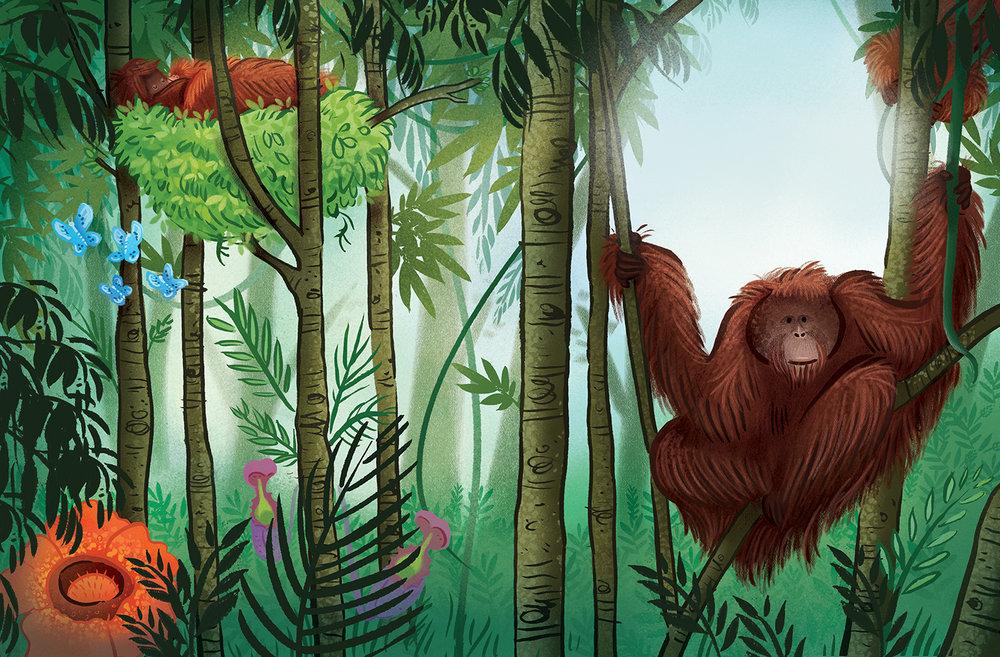 orangutanka_pg10-11_Papa.jpg