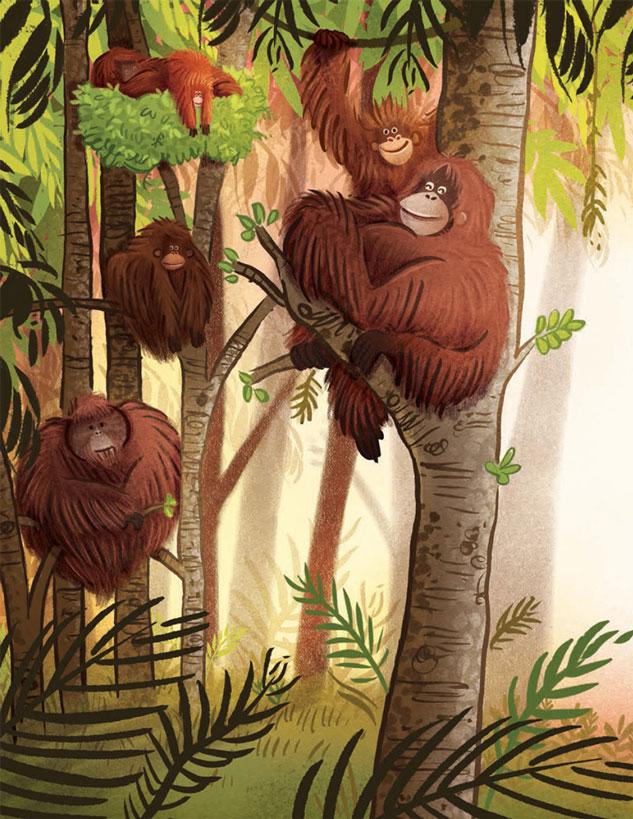 Orangutanka8.jpg