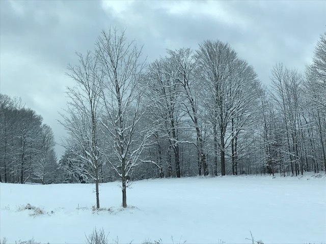 Shawn Anderson snow trees.jpg
