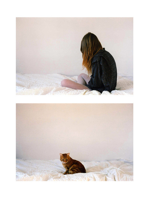 dreamcats :      (by  nikolinelr )