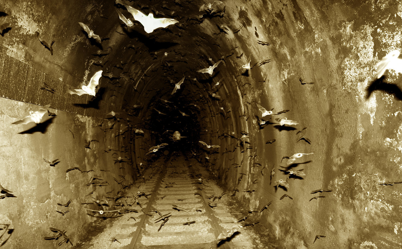 imperiousrex :      riotclitshave: Bats in the Tunnel by Jason J Cane