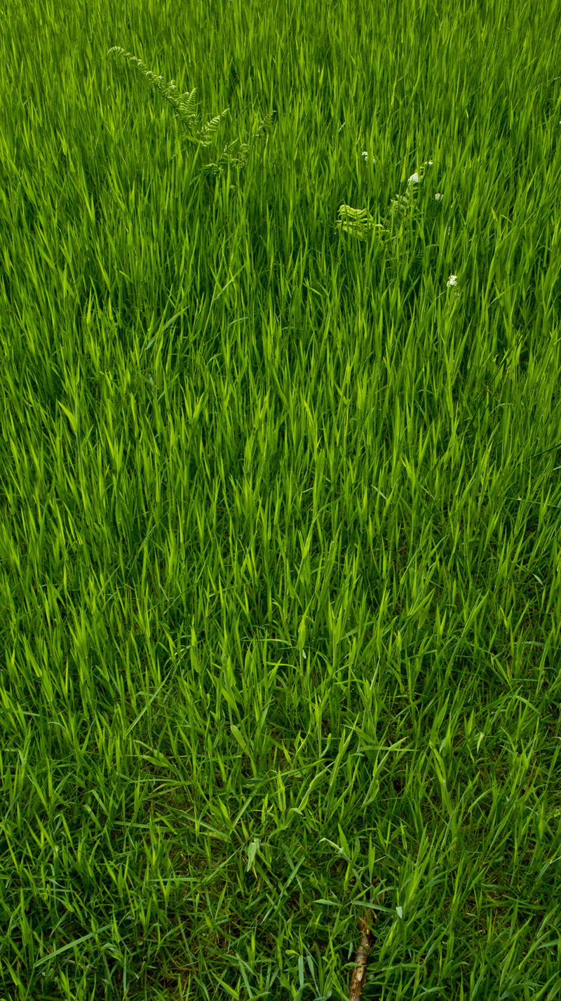 DavidElkins_Photography_Grass.jpg