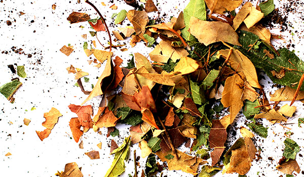 npr_web_banners_600x300_leaves.jpg