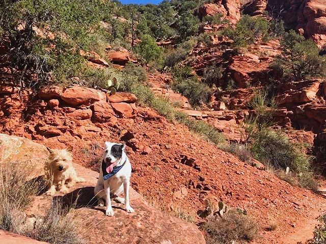 Lazer and Leroy's annual romp in the red rocks.
