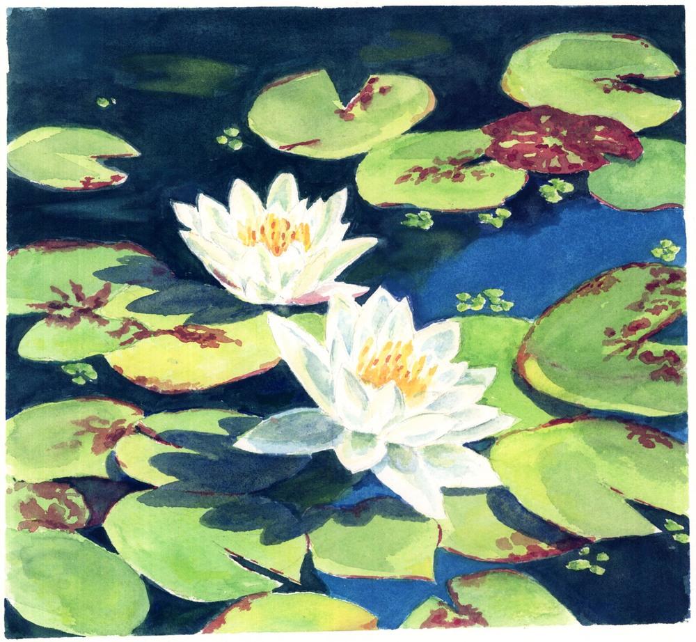 Water lilies at Vanderbilt Estate.jpg