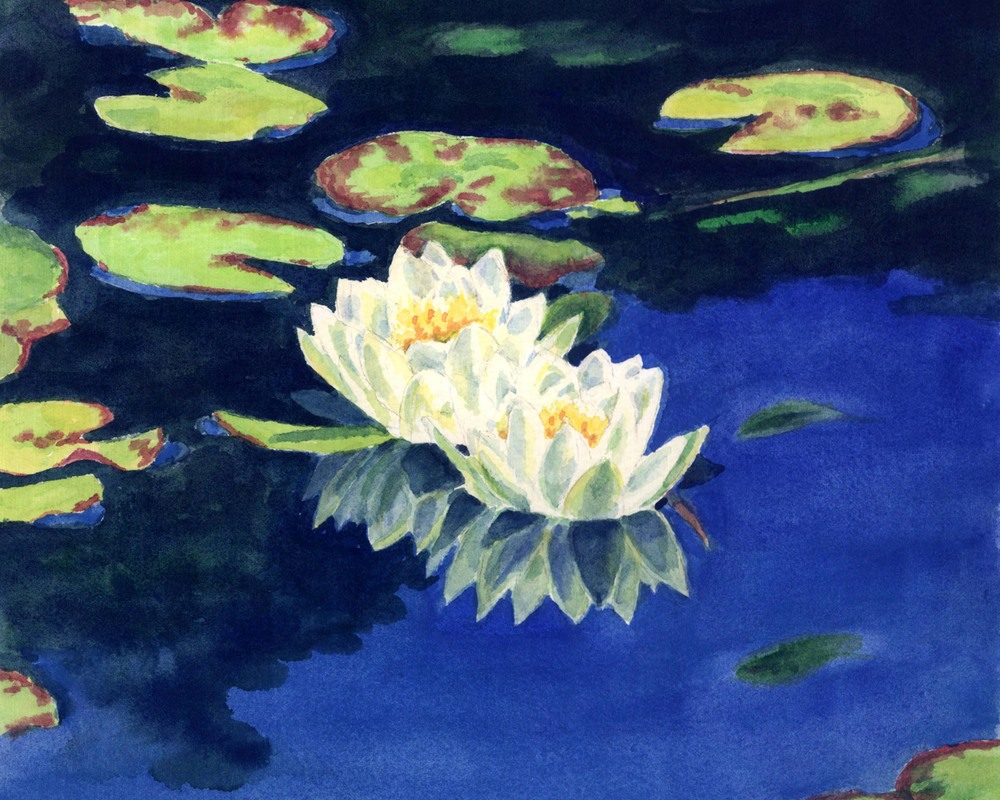 Water lilies reflection.jpg