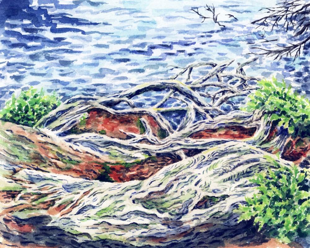 tree roots at 7th lake.jpg
