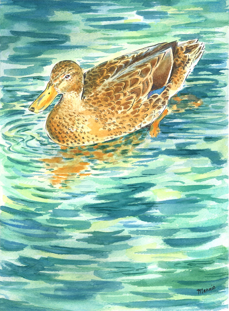 Skaneateles Duck in Late Afternoon Light