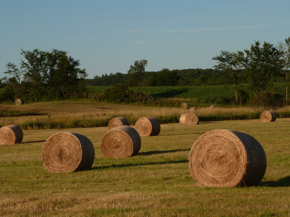 haystacks kingston ont..jpg