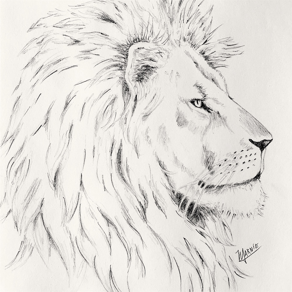 pencil lion2.jpg