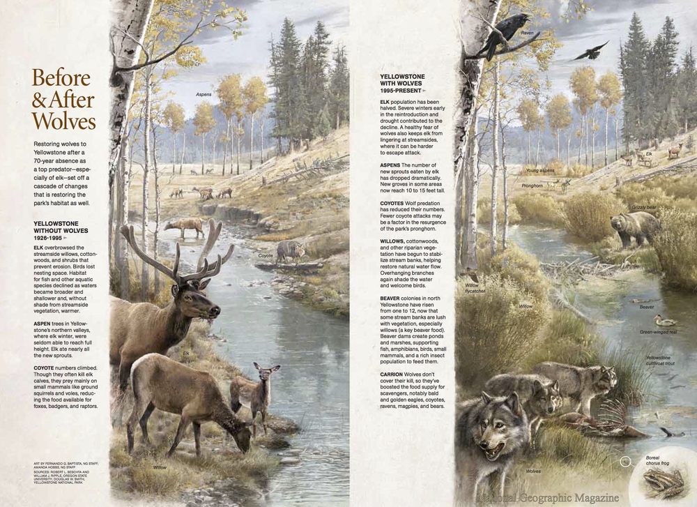 National Geographic  magazine, March 2010. Reproduced with permission.  Art by Fernando G. Baptista, NG Staff; Amanda Hobbs, NG Staff.