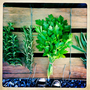 farmbox_herbs.jpg