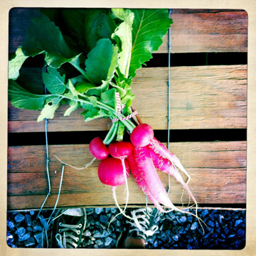farmbox_radish.jpg