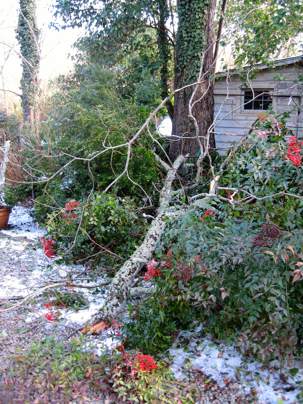 One of many such scenes after the ice storm here at Elm Street.  Broken limbs from magnolias and many other trees littered the grounds.