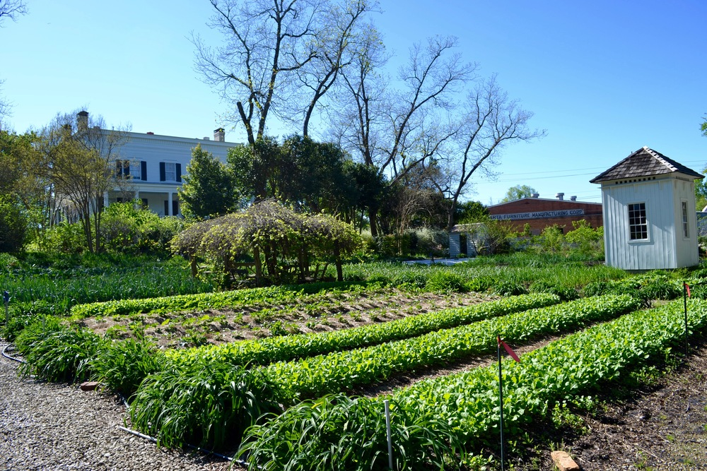 Elm Street Gardens begins to glow with green in the spring.