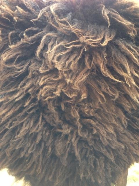dark pelt.jpg