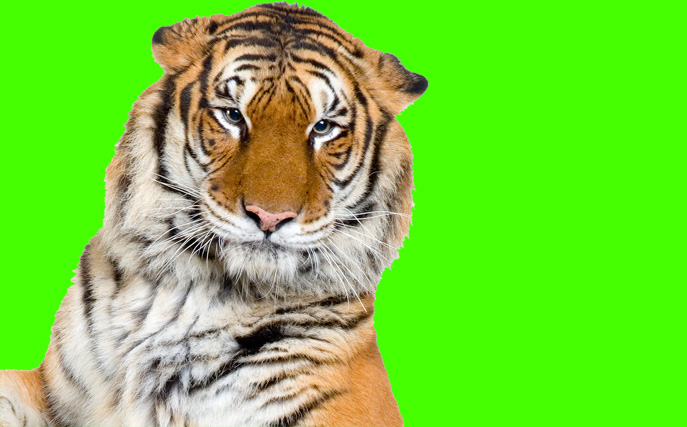 tiger-green.jpg