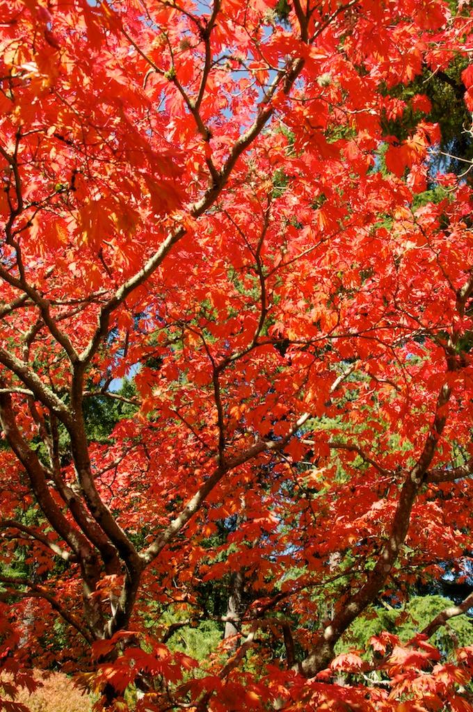 1013_japanese_garden (4).jpg