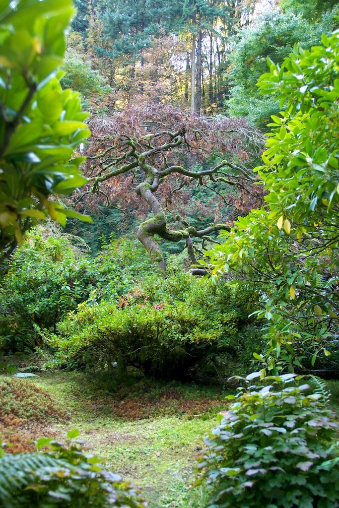 1013_japanese_garden (2).jpg