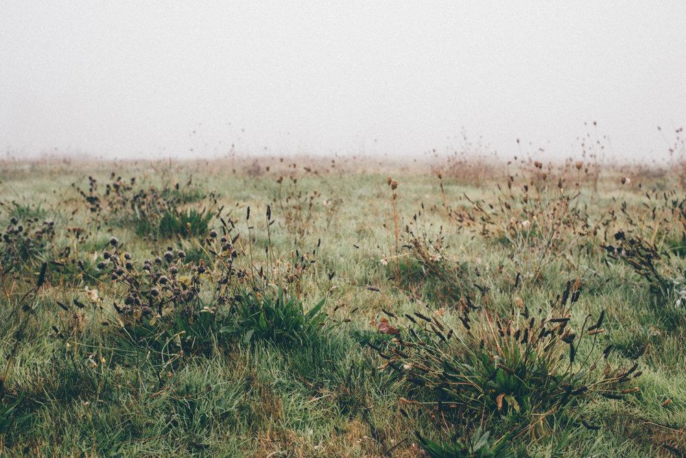 fernhill_park-2.jpg