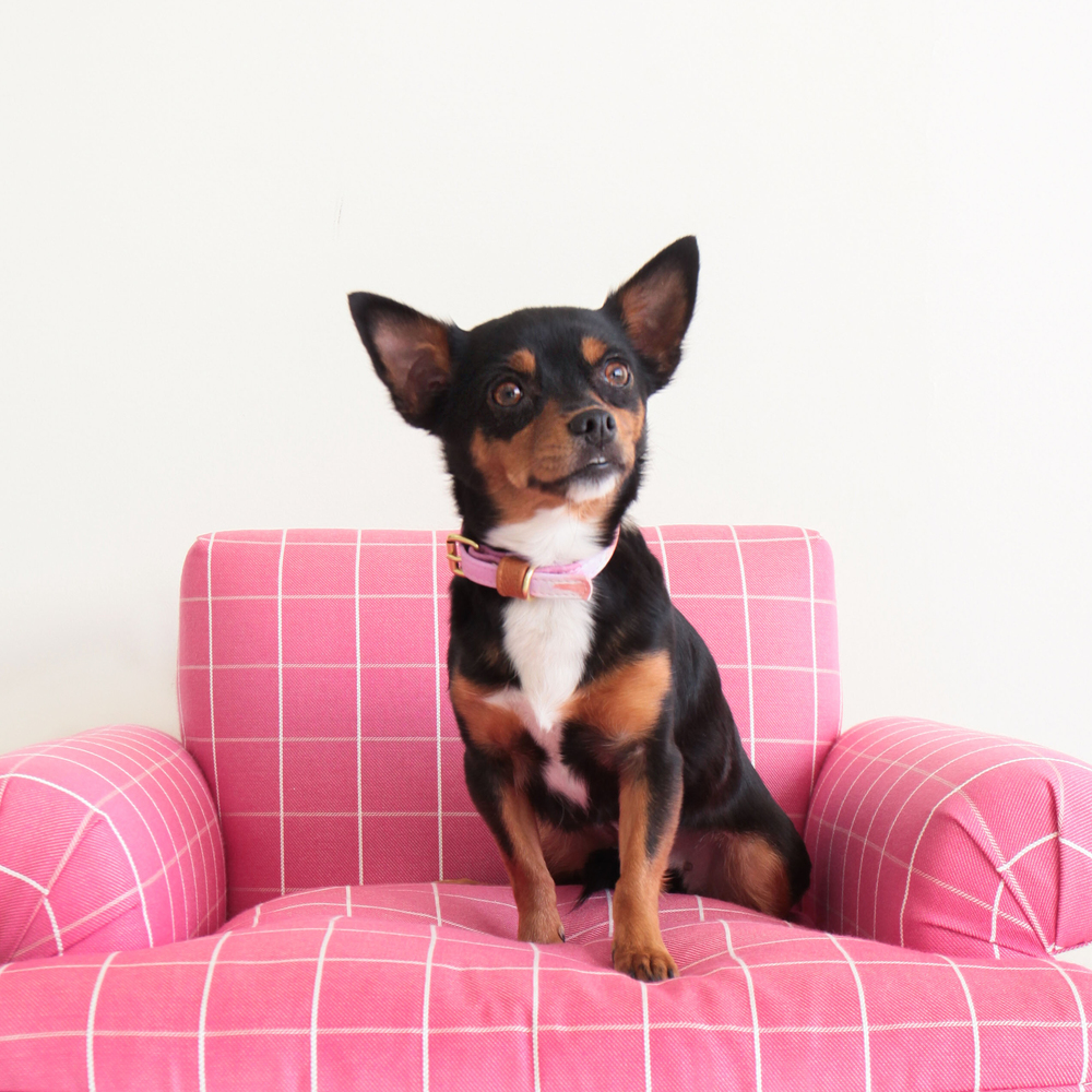 Nina: This 10-pound darling is a 3-year-old Chihuahua mix. Nina is just as sweet as she looks.