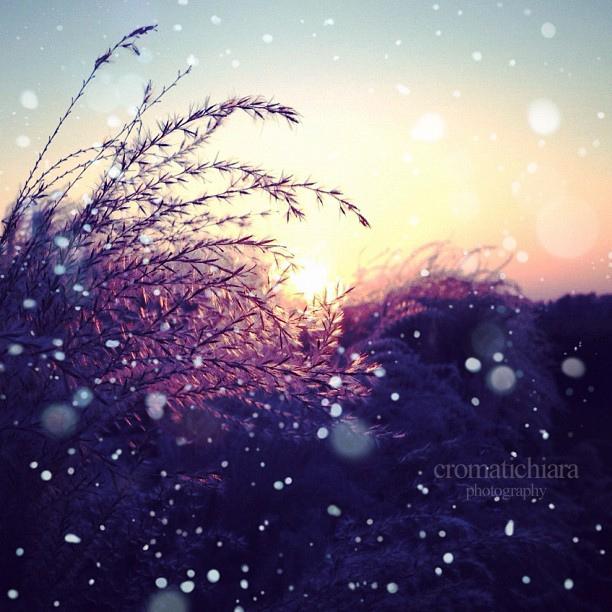 IMG_snowflakes.jpg