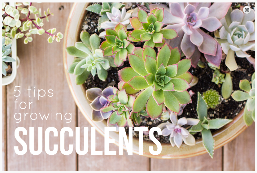 image via  succulents and sunshine