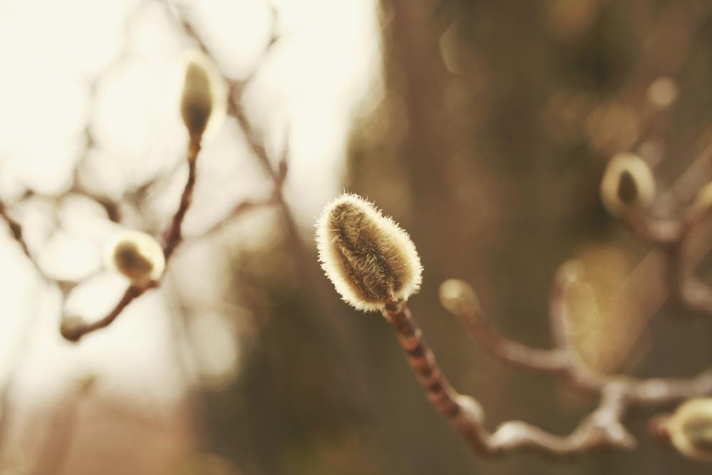 spring04.jpg