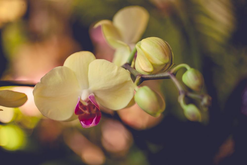 OrchidShow02.jpg