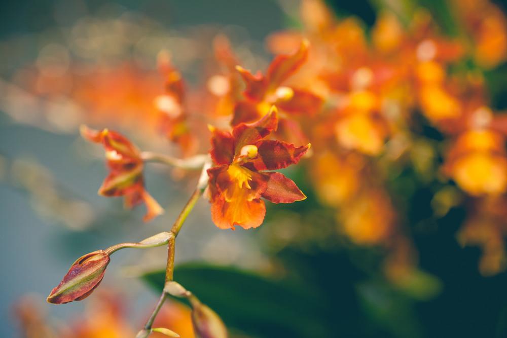 OrchidShow03.jpg